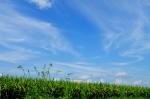 福寿草は種から花になるまで5年の歳月をかける