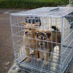 マンションでの犬 捨てられていた時の写真 2008年4月18日